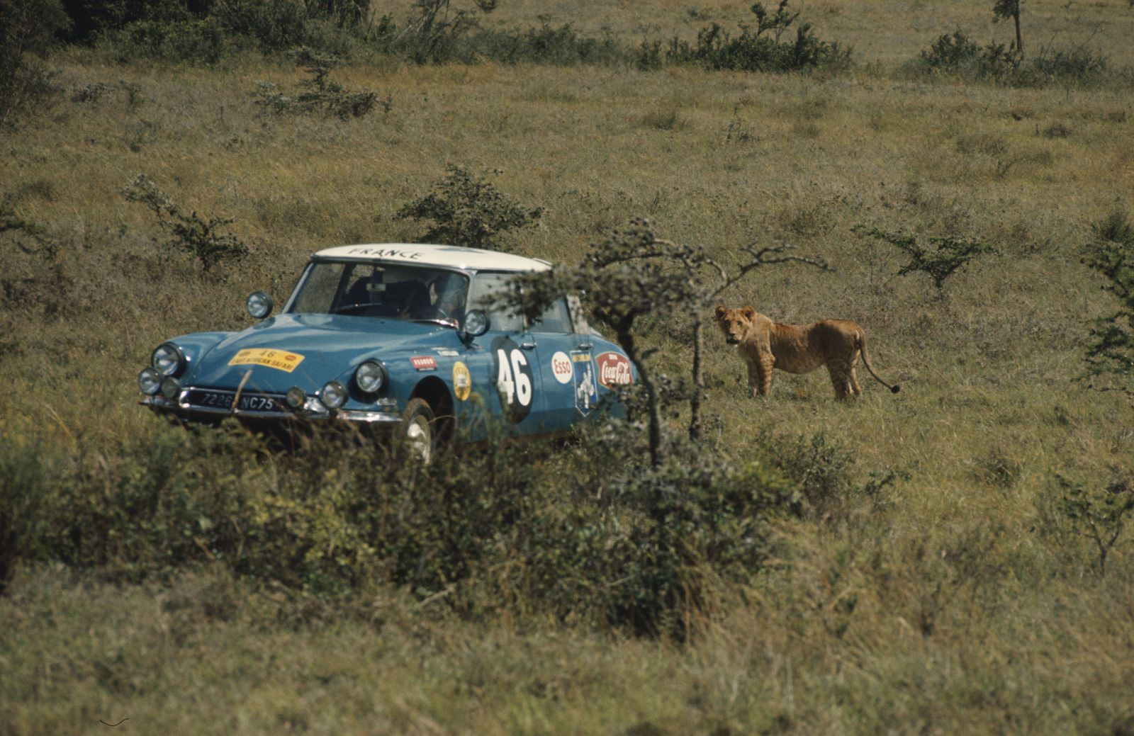 East African Safari 1965   CL 65 1 19 copyright DREUX   AZOULAY  SAUVIN   MATEL  .jpg