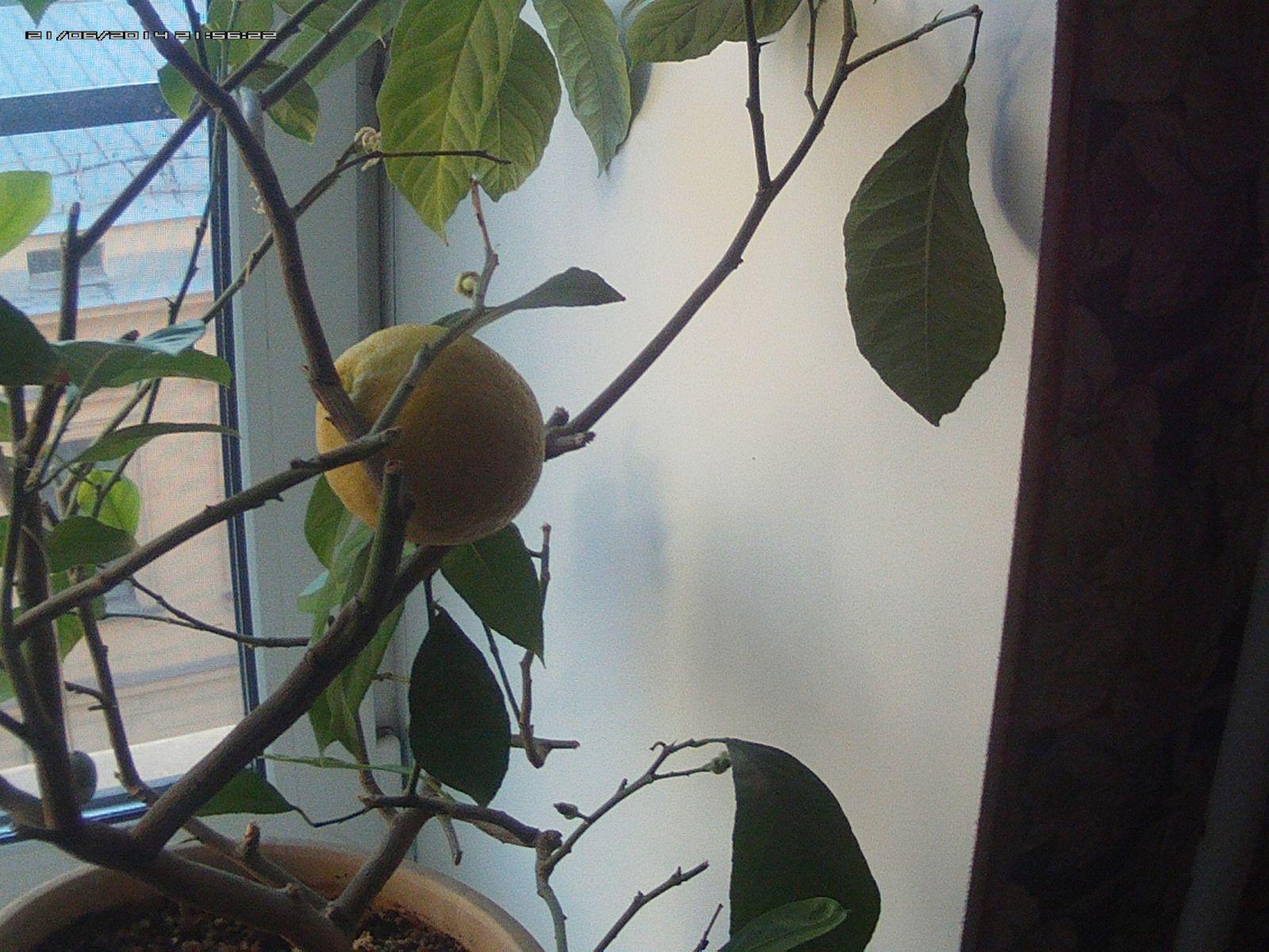 15.11.07 лимон